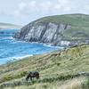 Horses at Dingle Peninsula Ireland Aug 2013
