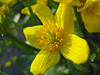 A Spring Flower.