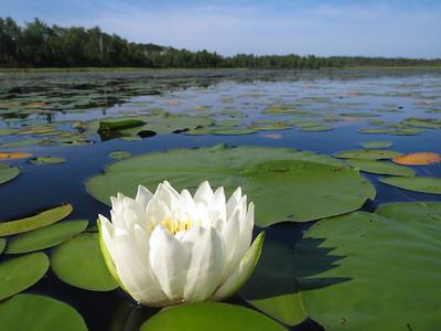 Pickerel Lake Nemadji State Forest MN.