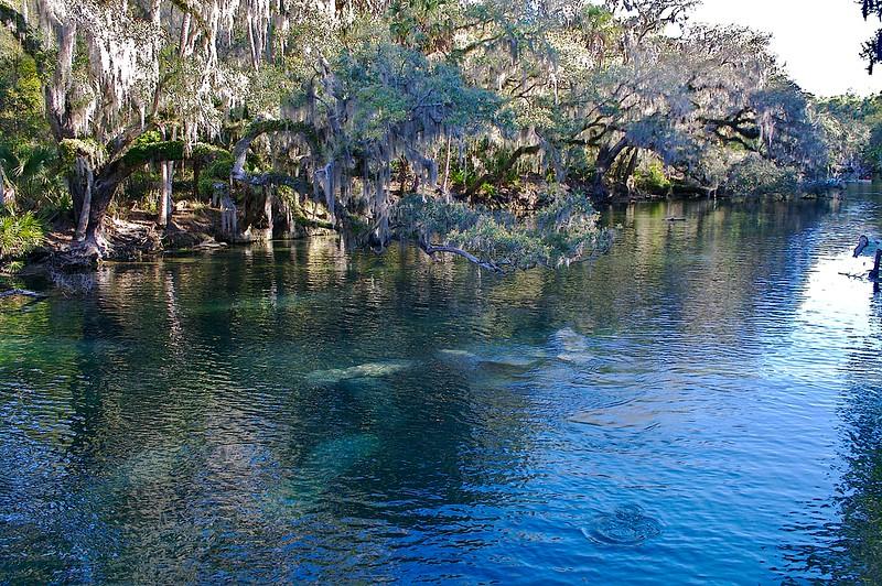 Manatee Blue Springs State Park Florida