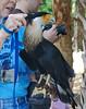 Bird of Prey....Wakiwa Springs State Park Florida.