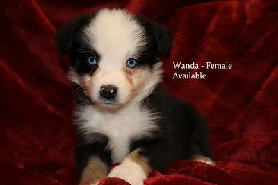 Wanda has been reserved