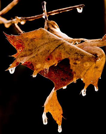 Feb 18 - Frozen Leaf