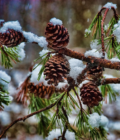 Feb 17 - Pine Cones or Snow Cones?