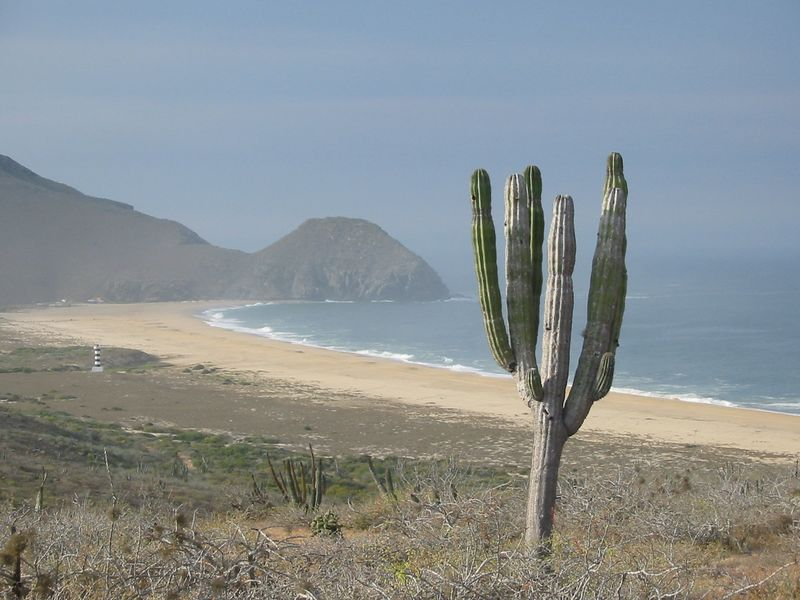 Cactus overlooking a beach in Todos Santos