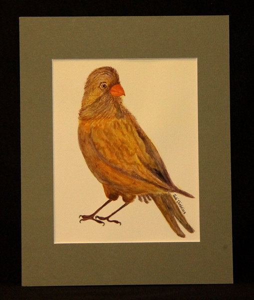 Bird 7 5x9 5