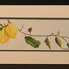 Lemons 4x11 5