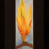 Fagus Grandifolia 3 5x11 5