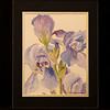 Lavender Iris 8x10 5