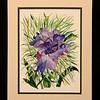 Linda Sue's Iris 8x11