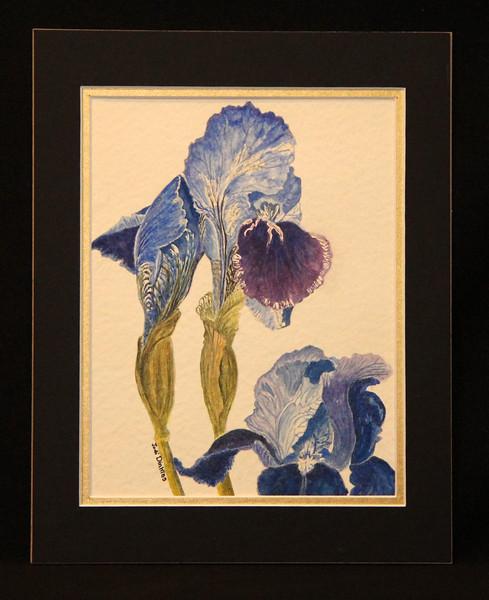 Blue Iris 8x10