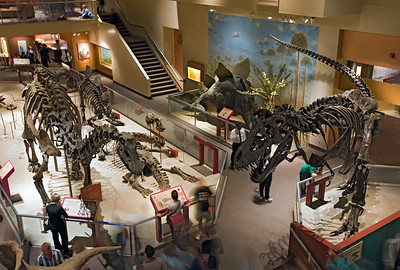Smithsonian Dinosaur Exhibit