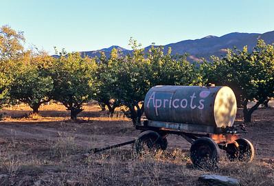 Apricot Orchard, Ojai