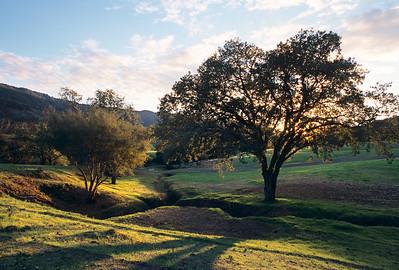 Ojai Oaks along Hwy. 150