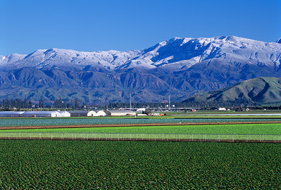 Oxnard Strawberry Fields with Snow Dusted Topa Topas in Background