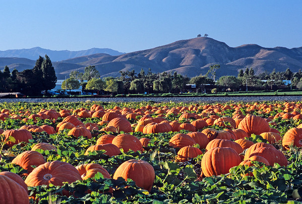 Pumpkin Patch, Ventura