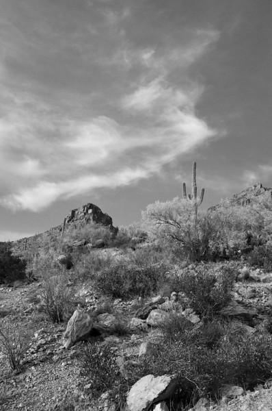 Tuscon Arizona Desert