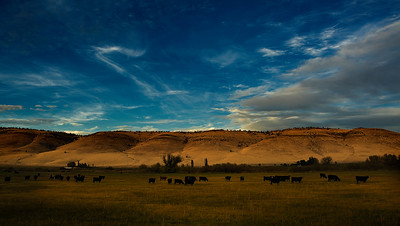 Bovine Community, Southern Oregon