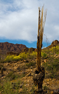 Near Tuscon, Arizona