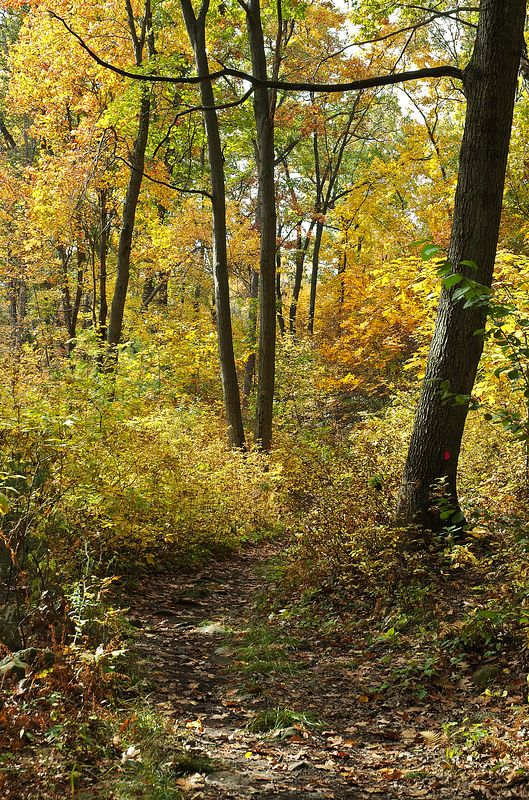 <b>Path through Whipple Hill in the fall</b>   (Oct 17, 2004, 11:47am)  <p align=left>This is a section of the main path through the center of Whipple Hill.  Although some of the leaves had already fallen (as you can see on the path), there was still plenty of color in the trees.</p>