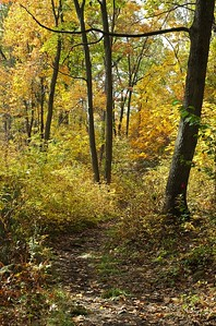 Path through Whipple Hill in the fall   (Oct 17, 2004, 11:47am)  This is a section of the main path through the center of Whipple Hill.  Although some of the leaves had already fallen (as you can see on the path), there was still plenty of color in the trees.