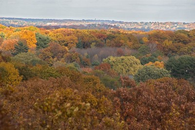 Colored tree tops of Winchester   (Oct 31, 2004, 03:06pm)