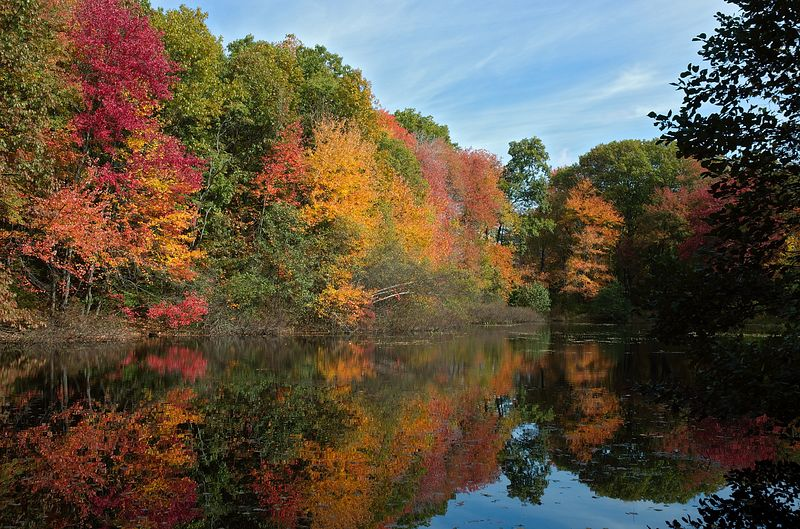 <b>Fall foliage across pond at Whipple Hill</b>   (Oct 17, 2004, 11:28am)  <p align=left>The next stop on my fall foliage tour was Whipple Hill; a 120 acre conservation area in the northeast corner of Lexington, MA.  This day, the trees on Whipple Hill were at the peak of color.</p>  <p align=left>This is a picture of fall foliage reflects in a small pond, on the eastern edge of the Whipple Hill area.  With bright sun and no wind, the reflection of the trees is almost as spectatular as the trees themselves.</p>