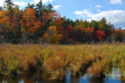 Wetlands in the fall next to the Nashua River Rail Trail.