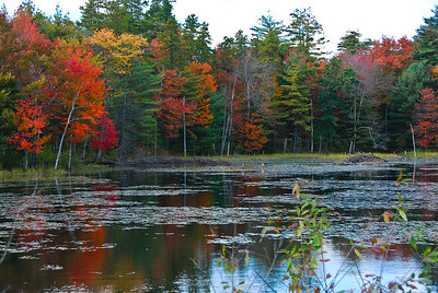 Pond along Nashua River Rail Trail in the fall.