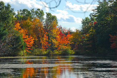 Pond along Nashua River Rail Trail in the fall.