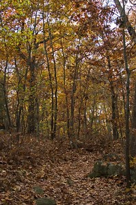 Path through fall colors   (Oct 31, 2004, 03:40pm)