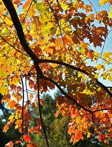 Light through fall leaves   (Oct 17, 2004, 09:25am)