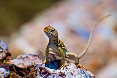 Reptile Stance