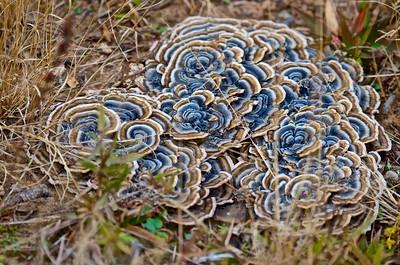 Fungi Colors