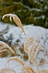 Powder Snow