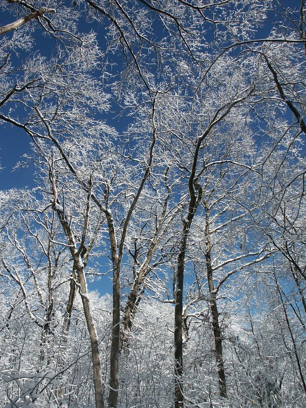 <b>Snow covered branches against a blue sky</b>   (Jan 05, 2003, 11:20am)