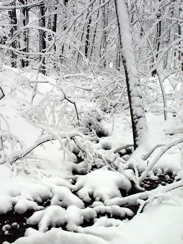 <b>A stream cutting through the new snowfall</b>   (Jan 04, 2003, 12:01pm)