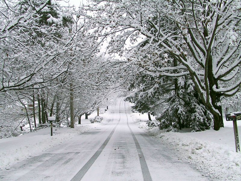 <b>Don't you love tree lined roads after it snows</b>   (Dec 09, 2001, 08:58am)
