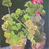 Pelargoniums (studio) 2 May 2017
