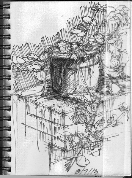 Sketch in backyard