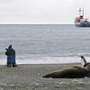 king penguins, elephant seal, & fur seal & the ushuaia