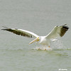 white pelican landing, port aransas, texas