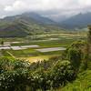 taro plantation, kauai, hawaii