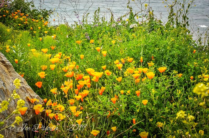 California Shoreline Color
