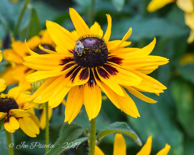Buchart Bee