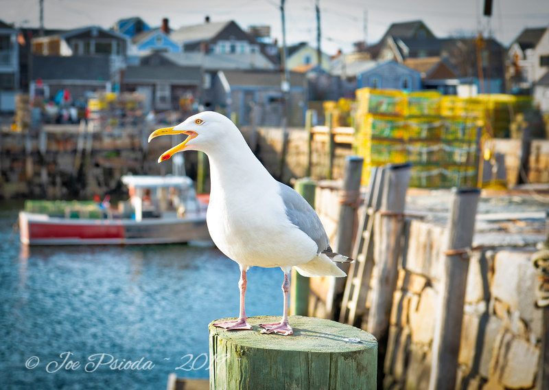 Seagulls Can Talk Too
