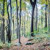 Laural Highlands Nature Trail