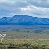 The Denali Landscape