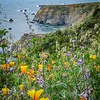 California Coastline Flowers