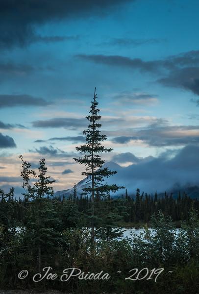 Black Spruce's View of Alaska Range